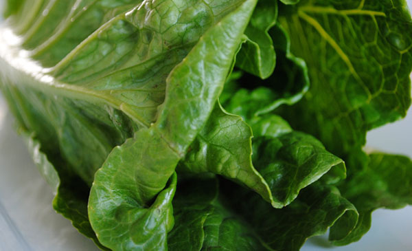 Romaine by the sensualist