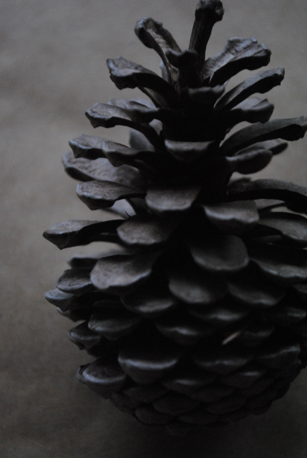 Pinecone by the sensualist