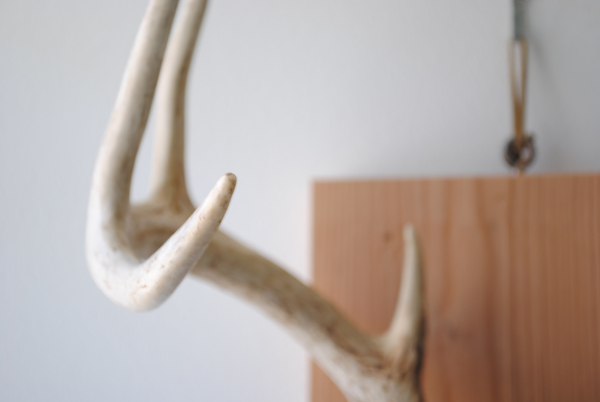 Antlers by the sensualist
