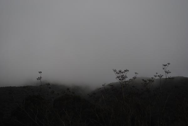 Fog by the sensualist