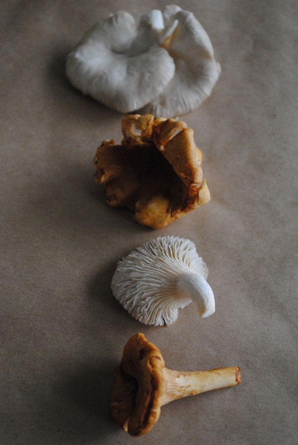 Mushrooms2 by the sensualist