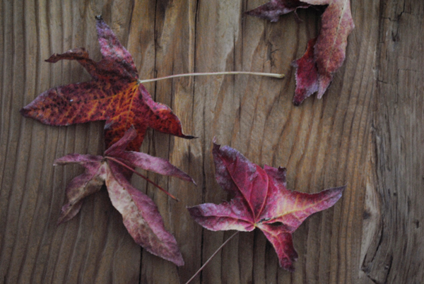 Leaves by the sensualist