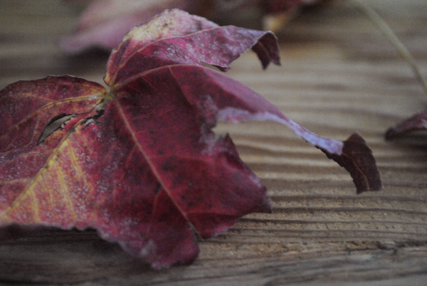 Leaves3 by the sensualist