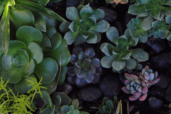 Succulents by the sensualist