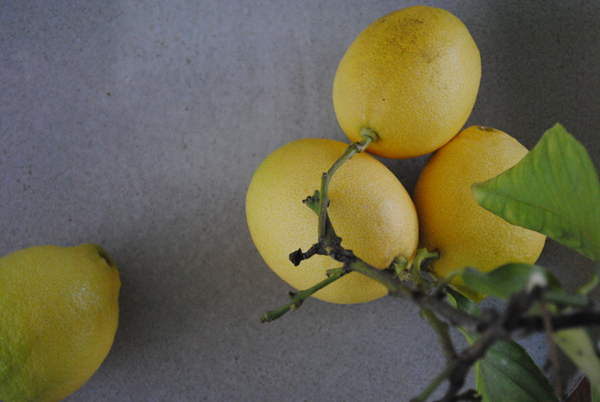 Lemons by the sensualist