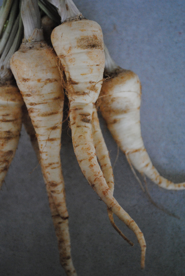 Parsley root by the sensualist