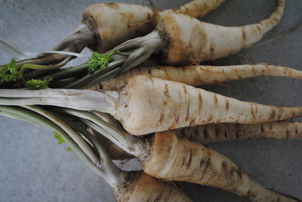 Parsley root2 by the sensualist