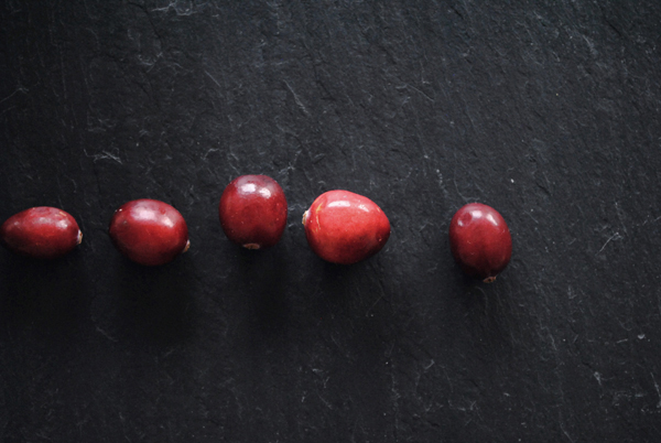 Cranberries2 by the sensualist