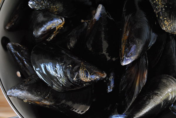 Mussels by the sensualist