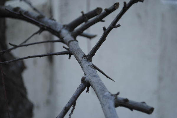 Thorns by the sensualist