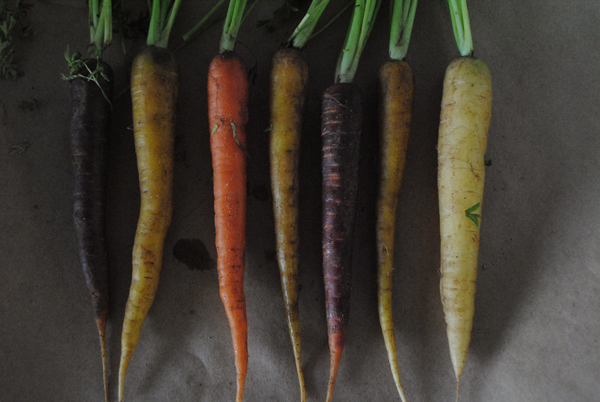 Carrots by the sensualist