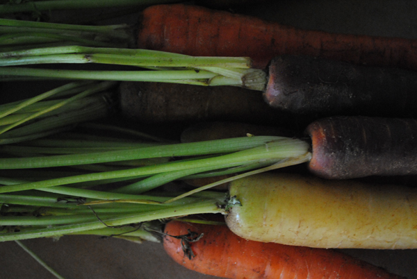 Carrots3 by the sensualist