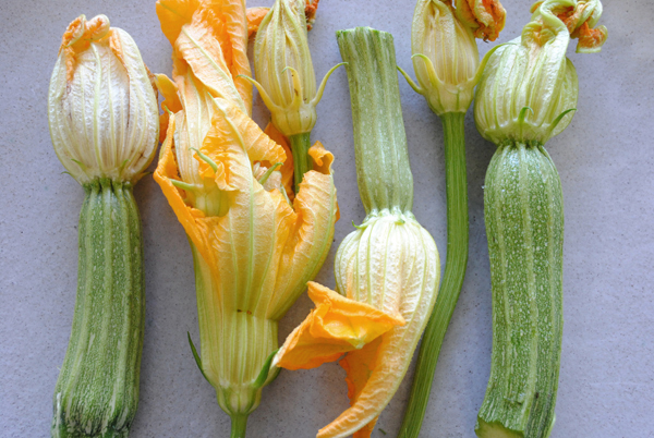 Squash blossoms by the sensualist
