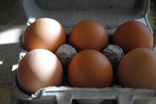 Eggs by the sensualist
